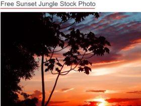 free photos reuse